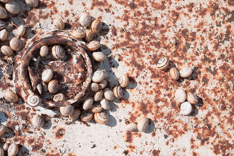 Escargots Catalans - Photo Didier Laget