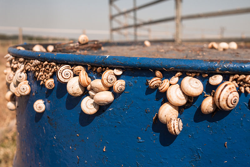 Escargots Catalans - Photo Didier Laget