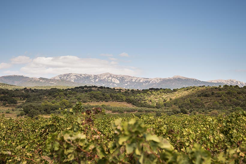 Les vigne et le Massis de l'Albera